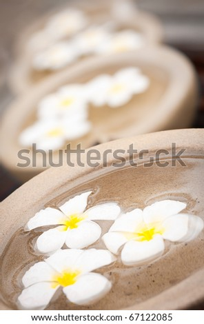 Beautiful and decorative tropical Frangipani flowers floating in water - stock photo
