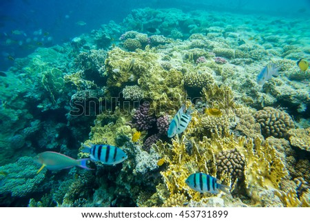 beautiful and diverse coral reef of the red sea with fish - stock photo