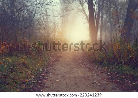 Beautiful and picturesque paths in the misty forest - stock photo