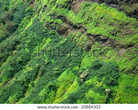 Beautiful and vibrant green patches on the top of the mountain.