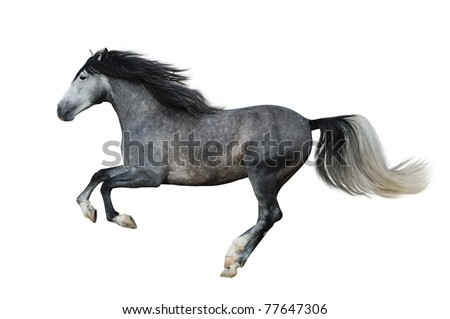 Beautiful andalusian stallion on the white background