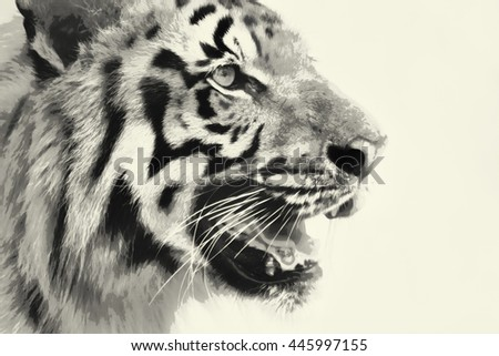 Beautiful angry face of Royal Bengal Tiger , Panthera Tigris, West Bengal, India. It is largest cat species and endangered, in Sundarban mangrove forest of India. Black and white watercolor image. - stock photo