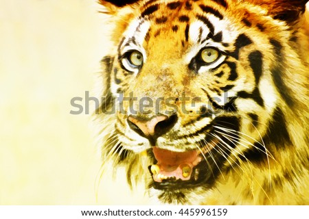 Beautiful angry face of Royal Bengal Tiger , Panthera Tigris, West Bengal, India - watercolor image . It is largest cat species and endangered , only found in Sundarban mangrove forest of India. - stock photo