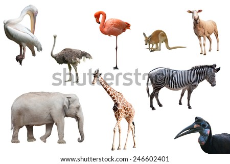 Beautiful animals and birds isolated - stock photo