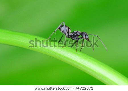 beautiful ant - stock photo