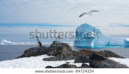 Beautiful Antarctic landscape with glaciers and bird in sky - stock photo