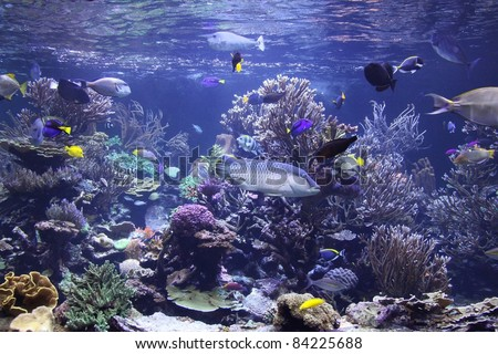 beautiful aquarium in the northeast of NY teaching about LI fish - stock photo