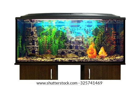 Beautiful aquarium with sea fish on a stand, white background - stock photo