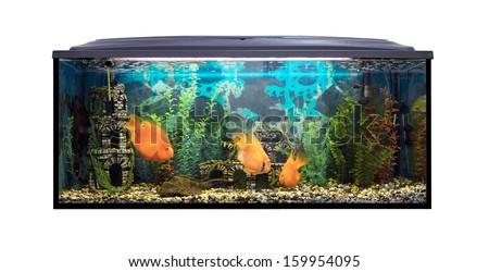 Beautiful aquarium with sea fish on a white background - stock photo
