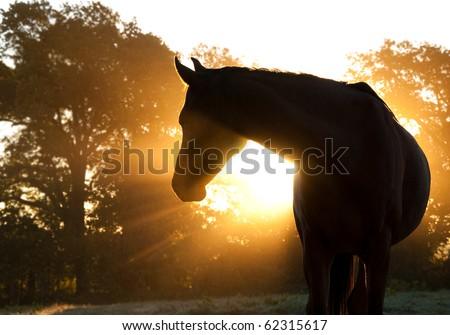 Beautiful Arabian horse silhouette against morning sun shining through haze and trees - stock photo