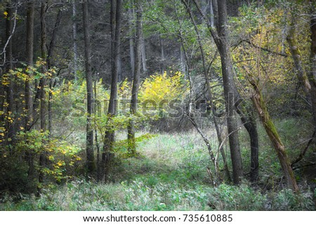 Beautiful artistic fall season forest tree landscape. Glow effect and selective focus used.