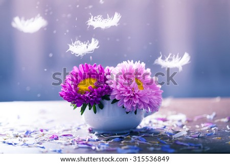 Beautiful aster flowers and falling petals - stock photo