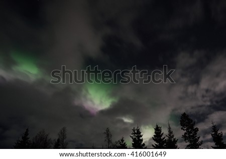 Beautiful aurora borealis in winter spruce tree forest