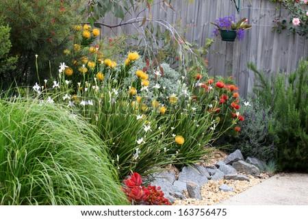 Beautiful Australian garden full of native plants and flowers - stock photo