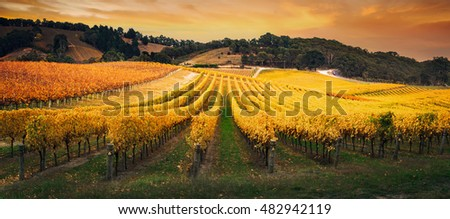 Beautiful Australian Vineyard Sunrise