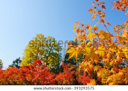 Beautiful autum background green and red foliage againt the blue sky - stock photo