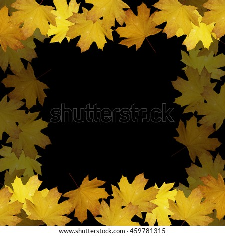 Beautiful autumn background with maple leaves isolated