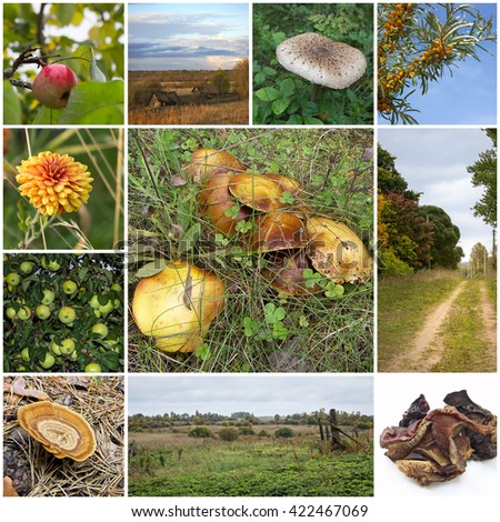 Beautiful autumn collage landscapes, berries, mushrooms and apples.