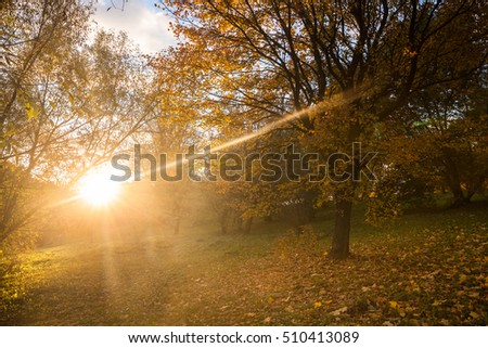 Beautiful, autumn colorful bright nature in the park with trees and bushes