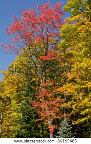 Beautiful autumn colors in Chequamegon-Nicolet National Forest, Wisconsin, USA - stock photo