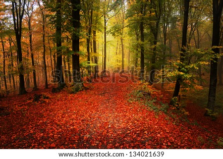 Beautiful autumn day in the forest | foggy day - stock photo