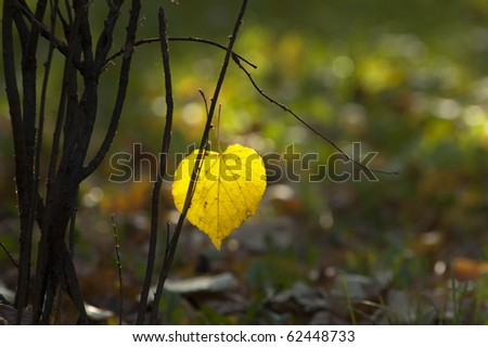 Beautiful autumn element - stock photo