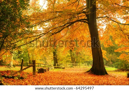 Beautiful autumn fall forest scene with vibrant colors and excellent detail - stock photo