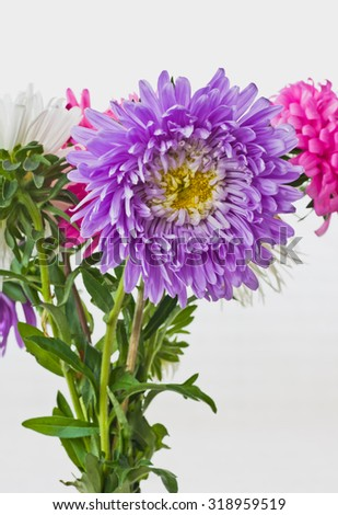 Beautiful autumn flowers asters - stock photo