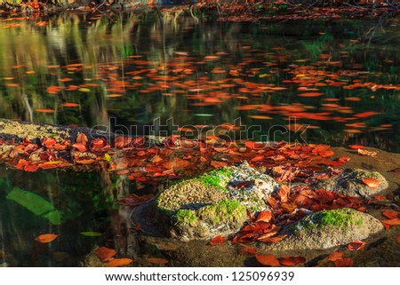 Beautiful autumn foliage and reflection patterns in mountain stream in the forest - stock photo