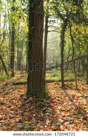Beautiful autumn foliage in the forest