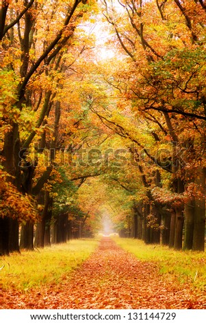 Beautiful autumn forest in national park 'De hoge Veluwe' in the Netherlands