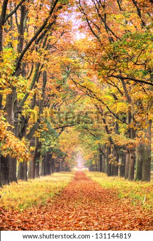 Beautiful autumn forest in national park 'De hoge Veluwe' in the Netherlands. HDR - stock photo