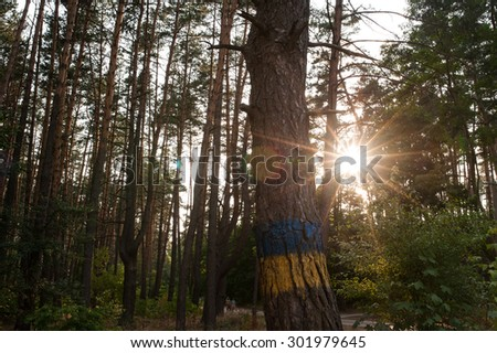 Beautiful autumn forest in summer. On the tree painted flag of Ukraine - stock photo