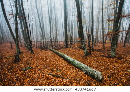 Beautiful autumn forest in the fog