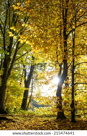 beautiful autumn forest landscape. fall in a park - stock photo
