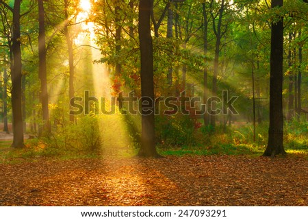 beautiful autumn forest lit by sunlight - stock photo