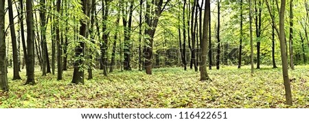 Beautiful autumn forest. Panorama view. Beauty nature - stock photo