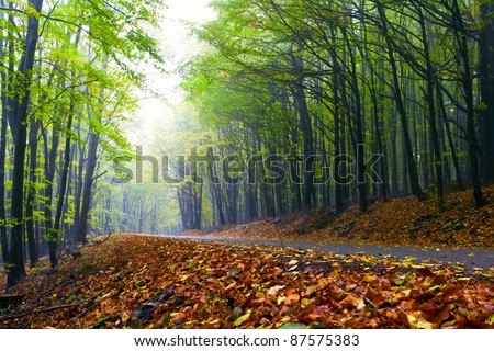 Beautiful autumn forest road winds in the mountains. - stock photo