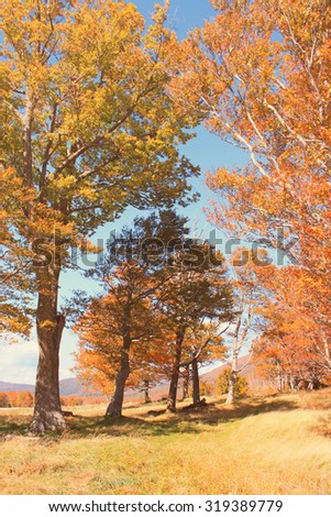 Beautiful autumn forest with retro filter effect - stock photo