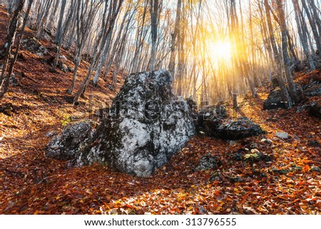 Beautiful autumn forest with stones in crimean mountains at sunset. Nature background