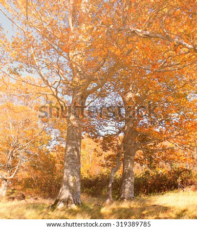 Beautiful autumn forest with warm toned - stock photo