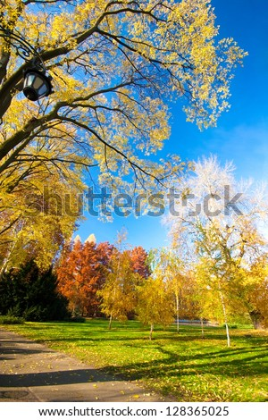 beautiful autumn in city park