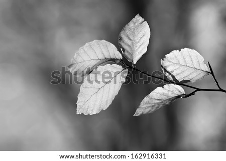 Beautiful autumn in forest 2, black and white - stock photo