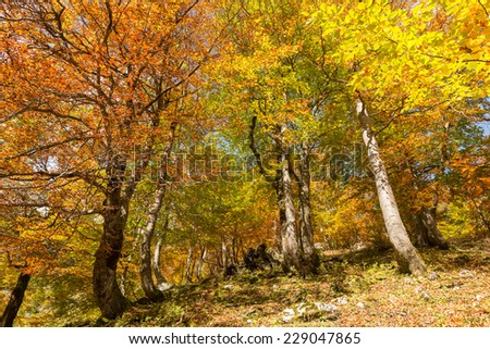 Beautiful Autumn in the Bavarian Alps, Germany - stock photo
