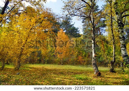 beautiful autumn in the forest - stock photo