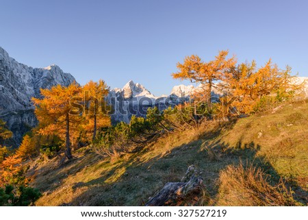 Beautiful autumn landscape in Julian Alps. Larches are glowing in the early morning.