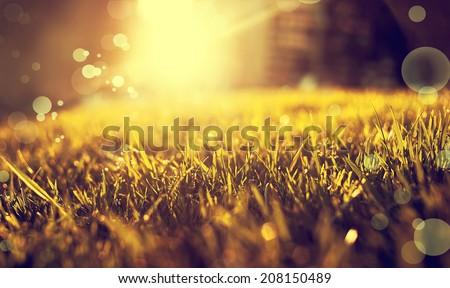 Beautiful autumn landscape, orange green grass, bright yellow sun light, gorgeous warm weather, fall season concept - stock photo