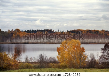 Beautiful autumn landscape with colorful trees and a lake, birch grove on the opposite bank.