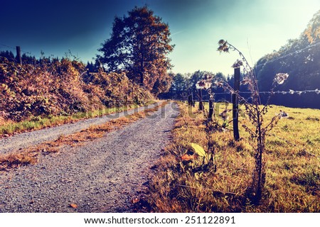 Beautiful autumn landscape with country road - stock photo