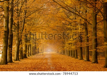 Beautiful autumn lane in the forest - stock photo